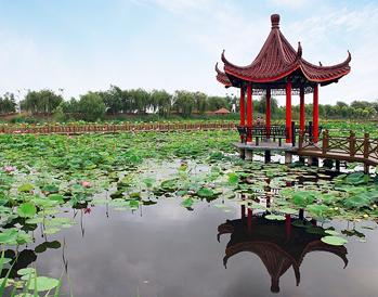 湿地最美荷花季(六月中旬到九月上旬)