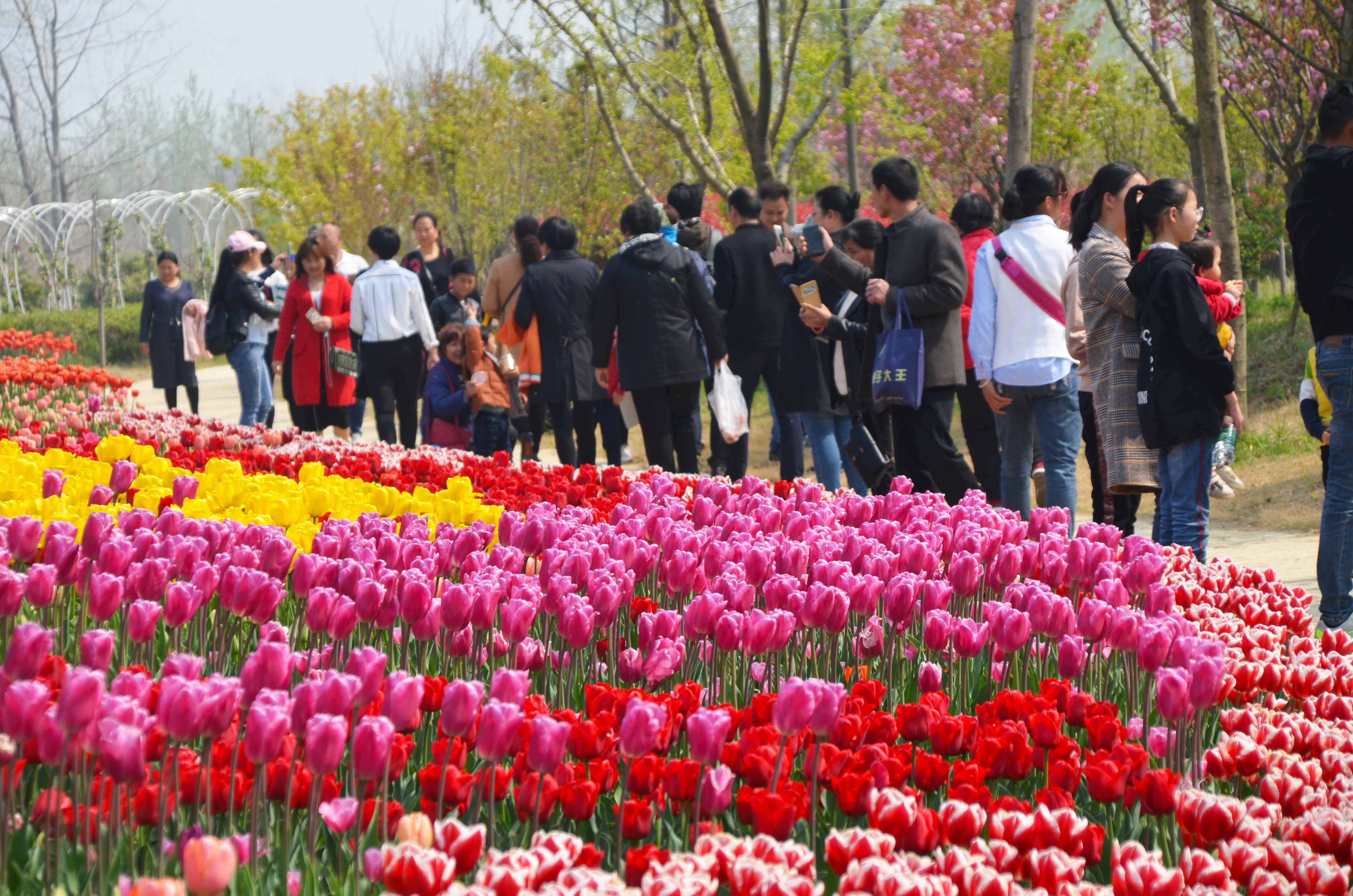 春暖花开清明小长假洪泽湖湿地旅游人数持续攀升迎来游客高峰